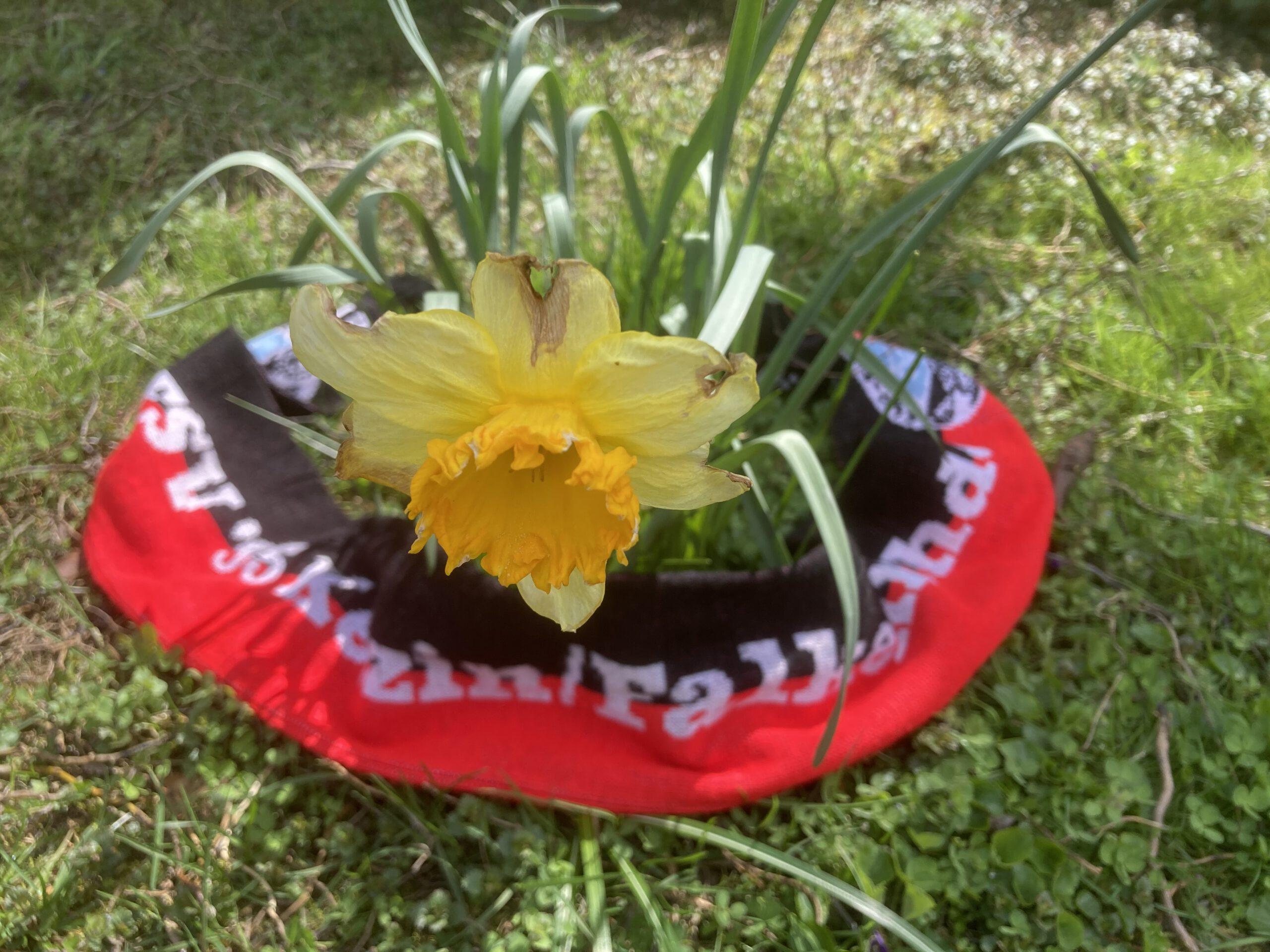 Zarte Frühlingsblüten: Kindertraining bald wieder möglich